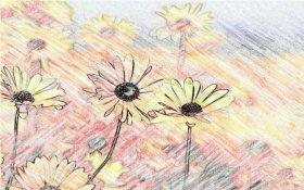Pencil Camera - фотографии с эффектом карандаша