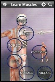 Learn Muscles: Anatomy - изучение названия и расположение мышц человека