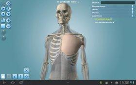 Anatomy 3D - Anatronica - детальная демонстрация опорно-двигательного аппарата
